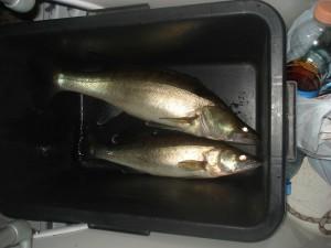 Норвежский улов