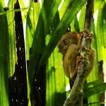 lemur_philippines-768x511